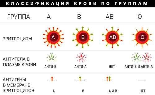 группа крови новорожденного