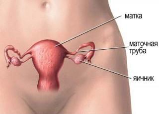 Во время овуляции значительно увеличивается количество гормонов