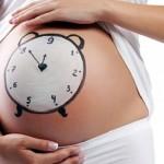 Все об определении недели беременности