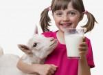 Что нужно знать о пользе козьего молока для детей
