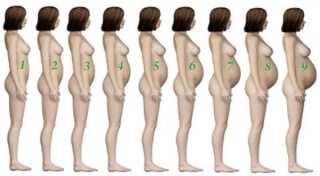 Во сколько при беременности начинает расти живот
