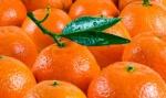 Употребление мандаринов при беременности: за и против