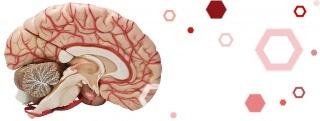 Действие препарата Танакан направлено на улучшение мозгового кровообращения