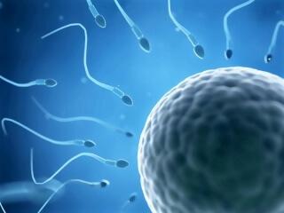 Только 25% спермы пригодны для размножения