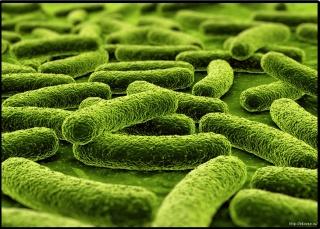 Пребиотики восстанавливают нормальную флору кишечника