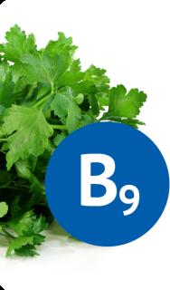 В одной порции салата, приготовленного из темной зелени, содержится суточная доза витамина В9