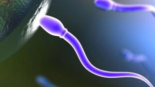 Беременность начинается с момента оплодотворения яйцеклетки