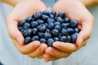 Черника - полезная целебная ягода