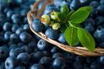 Можно ли чернику кормящей маме: советы специалистов