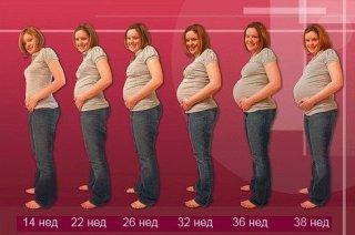 Весь период беременности состоит из трех триместров