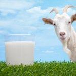 Со скольки месяцев можно давать козье молоко детям: выясняем вместе