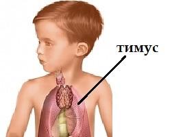 Заболевание вилочковой железы требует срочного лечения