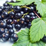 Чем полезны листья смородины при лечении детей: выясняем