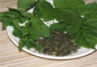Листья смородины - эффективное лечебное средство