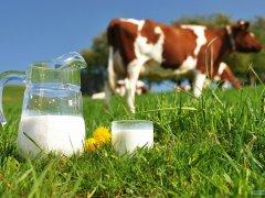 Несет ли в себе опасность коровье молоко детям до года и что думает Комаровский