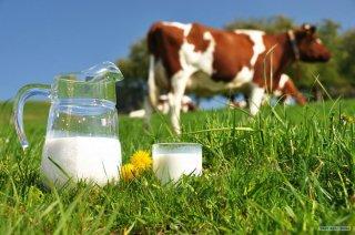 детские молочные смеси или коровье молоко