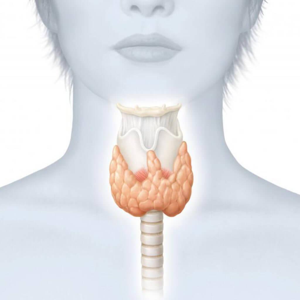 Воспаление щитовидной железы: лечение народными средствами 73
