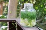 Укропная вода – спасение для новорожденного
